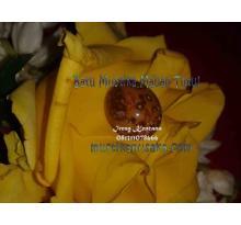 Mustika Kebal Panglima Kumbang ( Mustika Macan Tutul Syekh Muhidin )