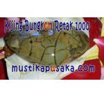 Batu Mustika Fosil Kijing Bungkem Sendang Kabuyutan Cirebon