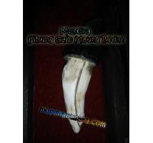 Fosil Mustika Sihung Gaib Maung Bodas
