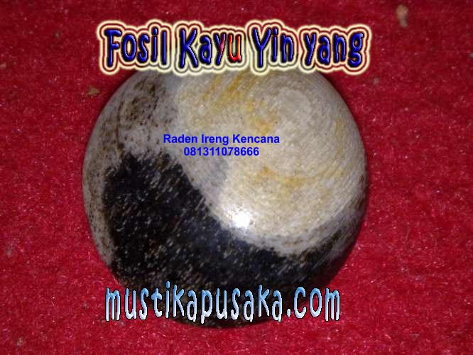 Fosil Kayu Yin Yang