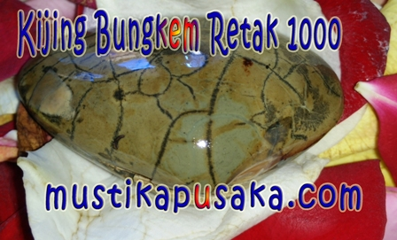 Kijing Bungkem Retak 1000