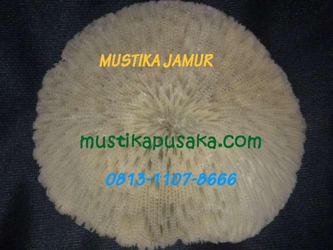 mustika jamur